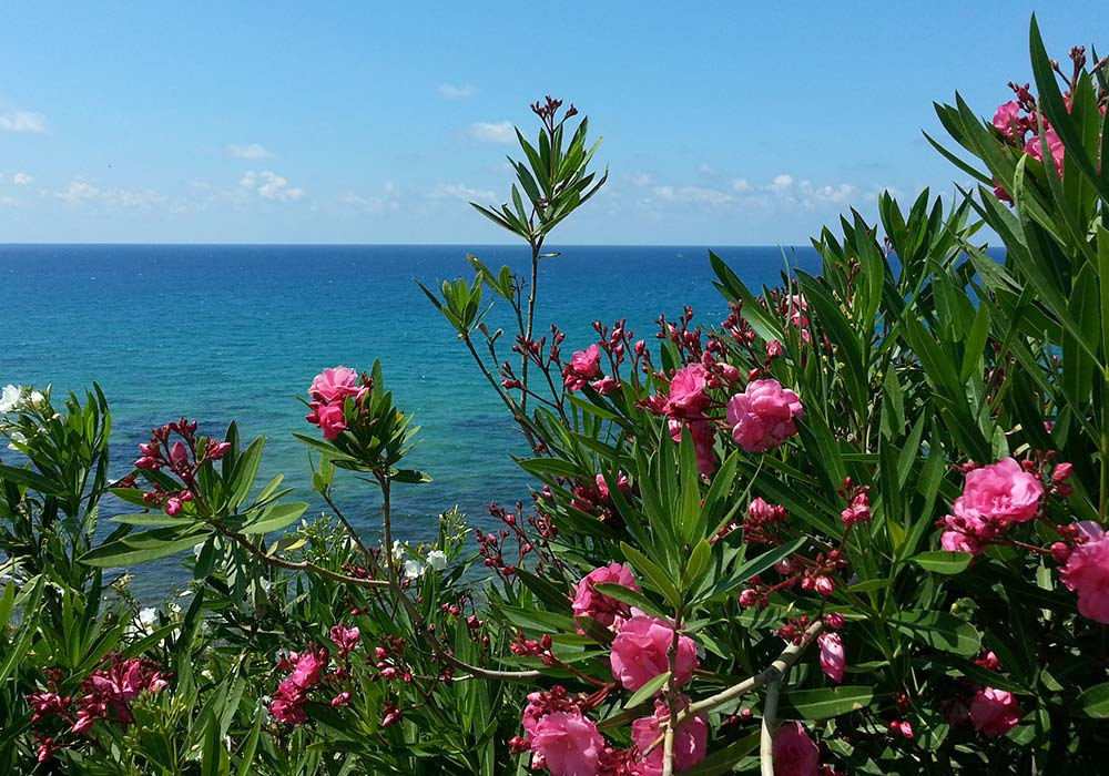 Flowers and an azure blue sea near the coastal town of Trappeto