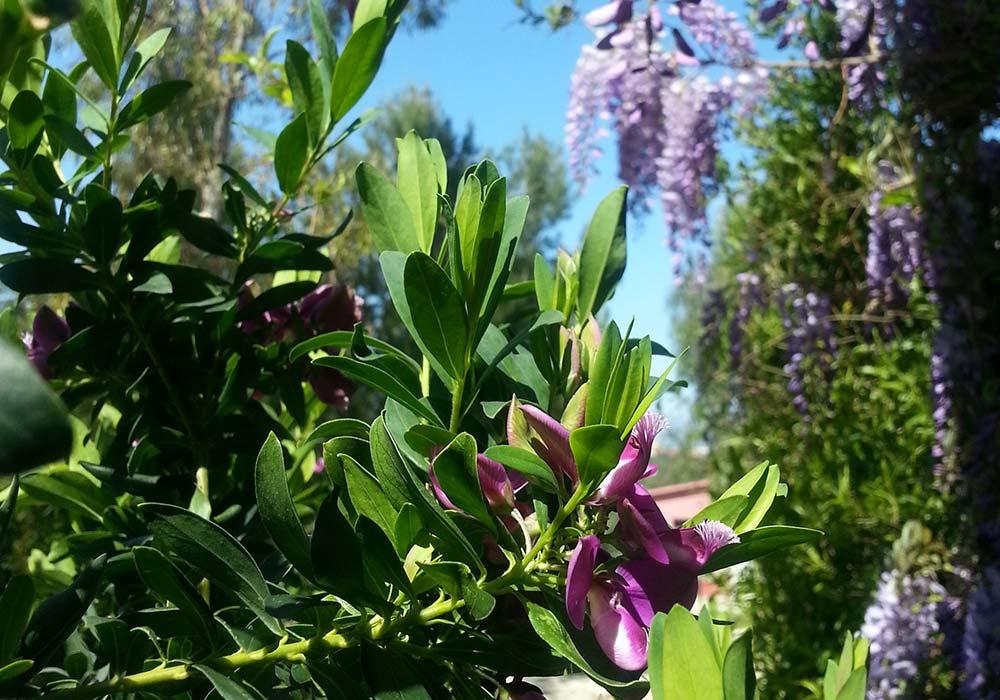 Spring in Sicily!