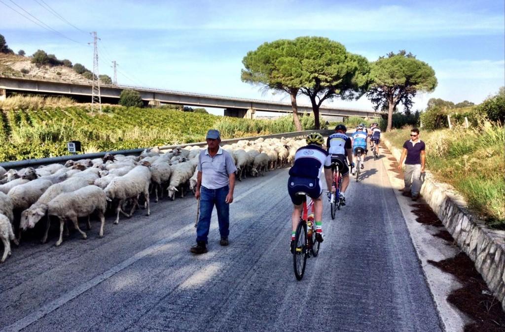 A shepherd near Monte Inici