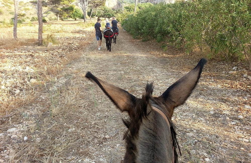 Donkey rides at agriturismo Pizzolungo