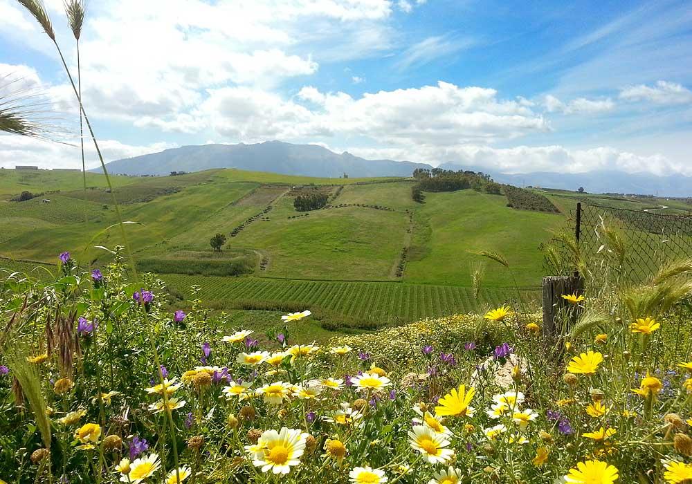 Een bloemenzee in de heuvels bij het plaatsje Alcamo