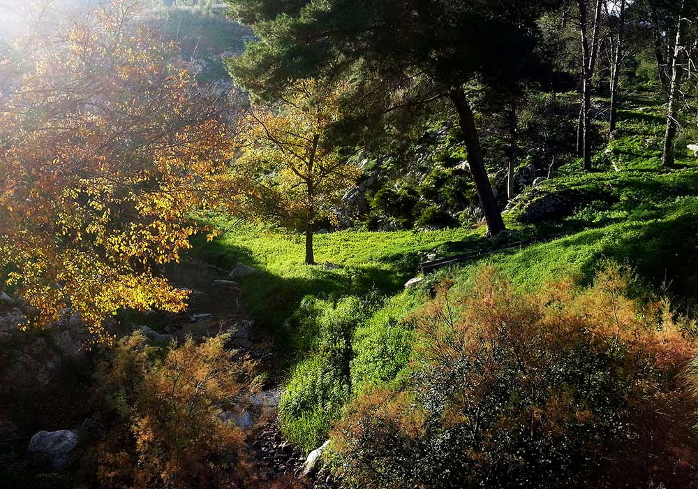 In het bos op de Monte Barbaro