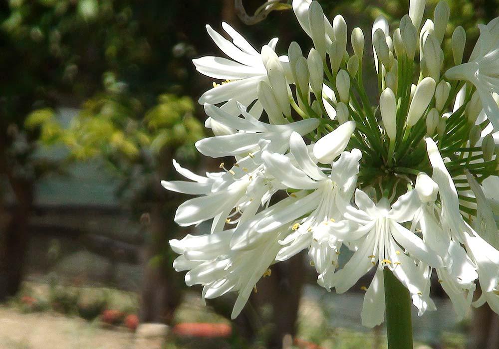 Een bloem in de tuin